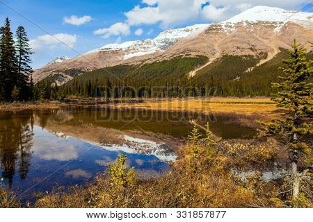 At the foot of Lake Peyto. Autumn Journey to the Rockies of Canada. Shallow lake overgrown with yellowed grass. Active, eco and photo tourism concept
