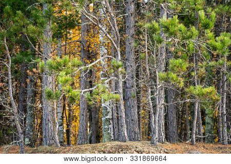 Fall Colors On The Trees Along The Apostle Islands National Lakeshore In Wisconsin On Lake Superior