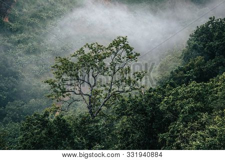 Forest Nature And Foggy In The Mountain