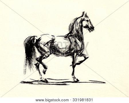 Prancing Arabian Stallion, Graphic Drawing In Black Ink On Paper.