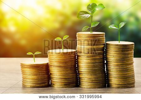 Money Savings, Investment, Making Money For Future, Financial Wealth Management Concept. A Plant Gro