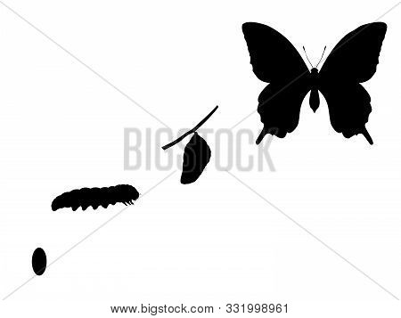 Butterfly Birth. Silhouettes Butterfly Caterpillar And Cocoon. Vector Illustrator