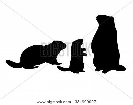 Groundhog Family. Silhouettes Rodent Of Animals. Vector Illustrator