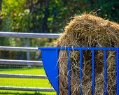 A blue metallic bale feeder contains a bale of hay for the animals in a fenced enclosure on a farm. poster