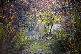 Autumn Nature - Misty Autumn View Of Autumn Park Alley In Dense Fog. Autumn Landscape Scene - Lonely
