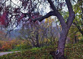 Autumn Nature - Misty View Of Autumn Park Alley In Dense Fog. Autumn Landscape Scene - Lonely Park A