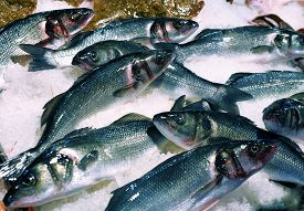 Cluster Of Sea Bass For Sale At Supermarket. Fresh Fish On The Ice For Selling.