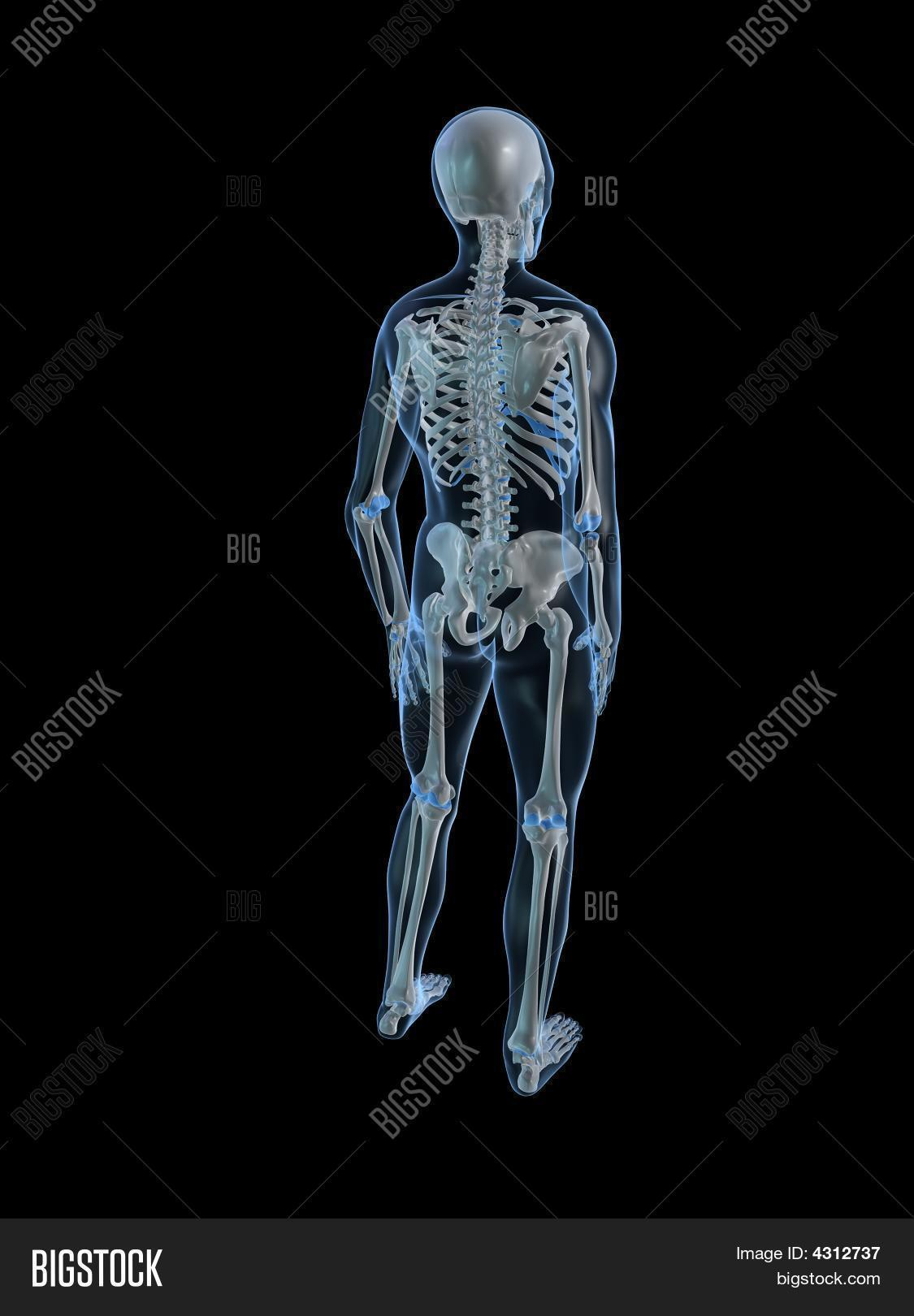 Human Skeleton Back Image Photo Free Trial Bigstock