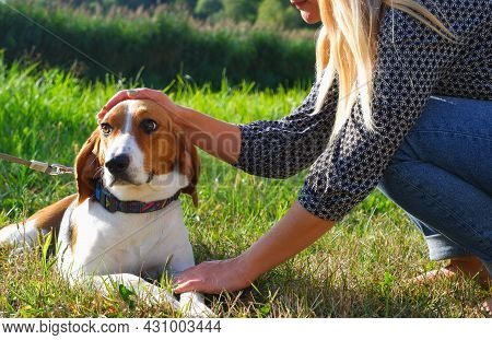 The Girl Plays With The Estonian Hound Dog. Adorable Puppy For A Walk On The Green Lawn In The Rays