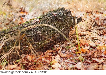 Fallen Tree Trunk Among The Autumn Leaves. A Log With The Hollow Of A Bird Or Animal. Autumn Forest.