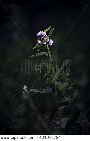 Stir In The Silence Of The Forest.spider Web In The Dark Forest, The Morning Dew.the Spider Spread O