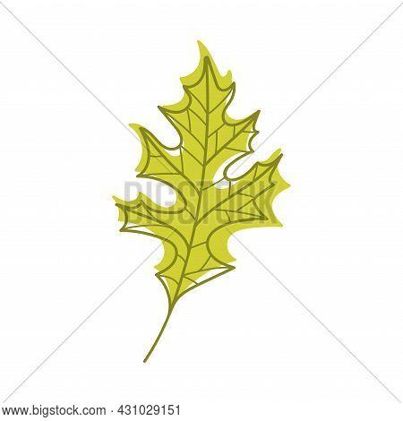 Green Autumn Oak Leaf With Veins As Seasonal Foliage On Stem Vector Illustration