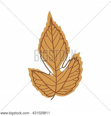 Brown Autumn Leaf With Veins As Seasonal Foliage On Stem Vector Illustration
