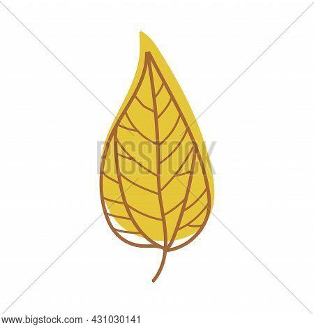 Yellow Autumn Leaf With Veins As Seasonal Foliage On Stem Vector Illustration