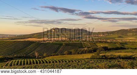 Vineyards under Palava near Dolni Dunajovice, Southern Moravia, Czech Republic