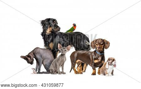 Group of pets in a row, Dogs, cats, rabbit, birds, isolated on white