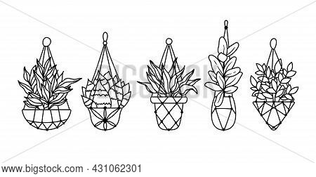 Succulent, Ficus Hanging Plants, Potted Boho Houseplants Isolated Clipart Bundle, Black And White Fl