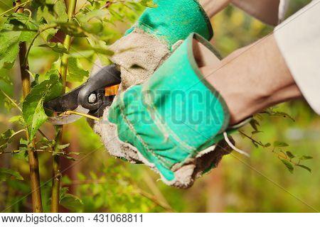 Gardener Liquidates Weed At His Green Bio Garden