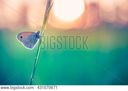 Beautiful Nature Close-up, Summer Flowers And Butterfly Under Sunlight. Bright Blur Nature Sunset Na