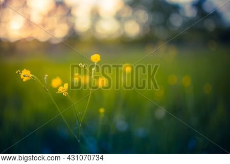 Abstract Soft Focus Sunset Field Landscape Of Yellow Flowers And Grass Meadow Warm Golden Hour Sunse