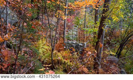 Colorful autumn trees in Michigan upper peninsula along Dead river