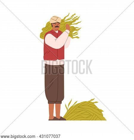 Indian Farmer Holding Collected Crops. Traditional Farm Worker With Sugar Cane Harvest In Hands. Hin