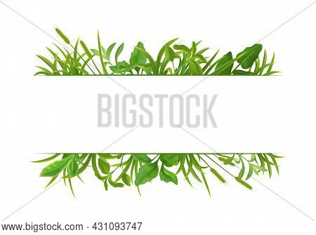 Green Grass Decorative Realistic Horizontal Double Border Frame Pattern On White With Cereal Plants