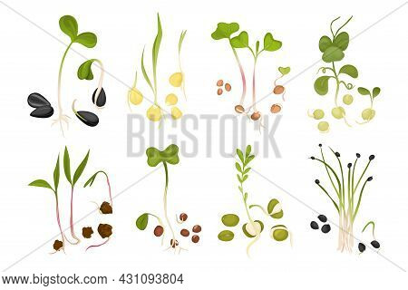 Microgreen Growing Seed Icon Set Small Sprouts Of Chives Arugula Peas And Other Microgreens Vector I