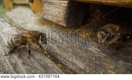 Bee Close-up. Honey Bees Flying Into Wooden Beehives. A Bee In A Hive, Close-up.
