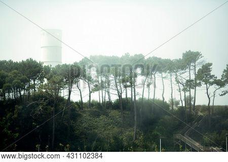 Biological Park of S.Paio in the fog, in Vila Nova de Gaia, Porto, Portugal.