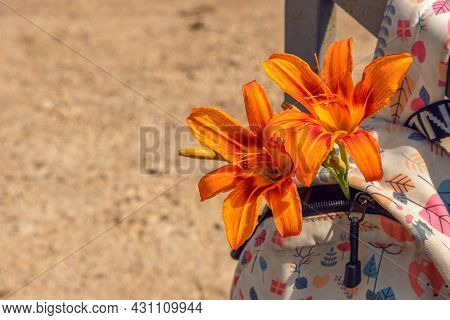 Lily Flowers In A Children's Backpack. The Bag Is Hanging With Flowers. Bright Lily Flowers Are Lyin