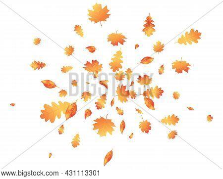 Autumn Leaves Flying Composition. Fall Maple Background. October Foliage Frame. Oak Leaf Decor Septe