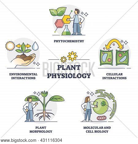 Plant Physiology Five Key Areas Study And Research Outline Collection Set. Labeled Educational Eleme