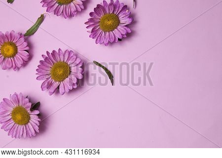 Beautiful Floral Background In Lilac Colors With Aster Flowers