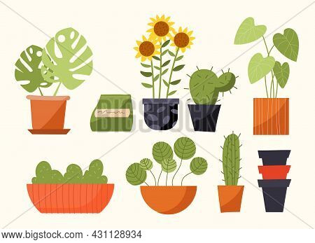 Plant In Pot Concept. Beautiful Indoor Plants For Decorating Interior Of Apartment Or Office. Set Of