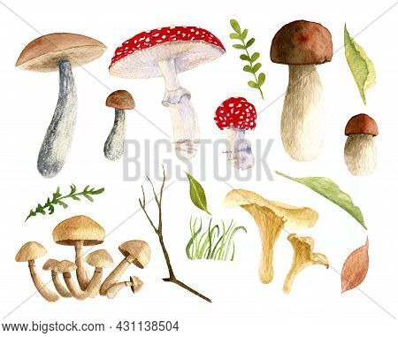 Watercolor Big Set With Mushrooms And Forest Plants. Hand Painted Botanical Illustration Of Autumn H