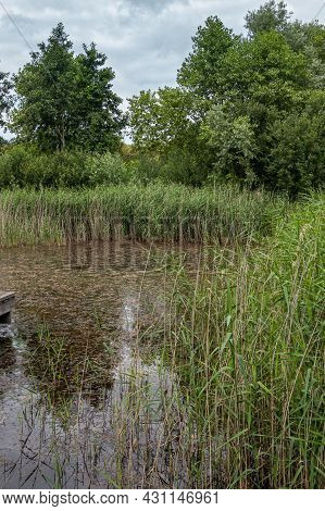 Knokke-heist, Flanders, Belgium - August 6, 2021: Zwin Nature Reserve. Pond With Dark Water And Plen