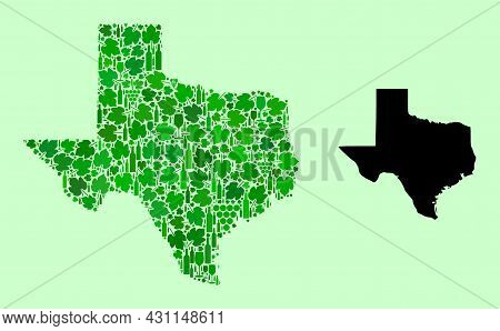 Vector Map Of Texas State. Combination Of Green Grape Leaves, Wine Bottles. Map Of Texas State Mosai