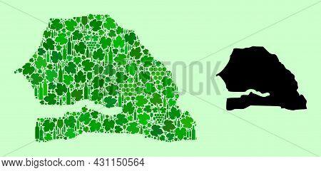 Vector Map Of Senegal. Mosaic Of Green Grapes, Wine Bottles. Map Of Senegal Mosaic Designed From Bot