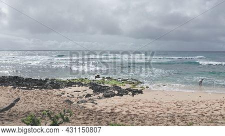 Camera Flies Over The Beach. People Swim In The Ocean. Yellow Sand At Sandy Beach On The Tropical Is