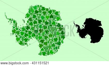 Vector Map Of Antarctica. Combination Of Green Grape Leaves, Wine Bottles. Map Of Antarctica Collage