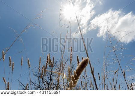 Closeup Dry Grass And Seed-heads Under Blue Sky With Sun Flare Above At Boggy Pond Walk And Lake Wai