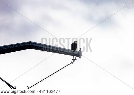Single Bald Eagle Perched Against Cloudy Sky