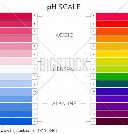 Ph Value Scale Chart. Acid-base Balance Infographic. Education Poster