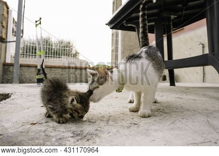 Mother And Cat Son Sniffing Each Other