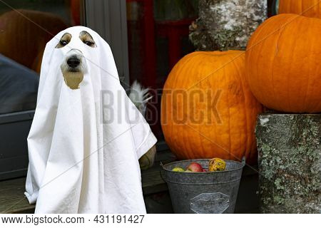 The Dog Sits Like A Ghost On The Steps With Pumpkins Jack, Scary And Creepy. Halloween Ghost
