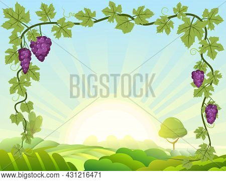 Rural Hilly Landscape With Bunches Of Grapes. Viticulture And Farming. Sunrise. Branches With Berrie