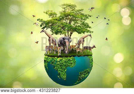 Concept Nature Reserve Conserve Wildlife Reserve Tiger Deer Global Warming Food Loaf Ecology Human H