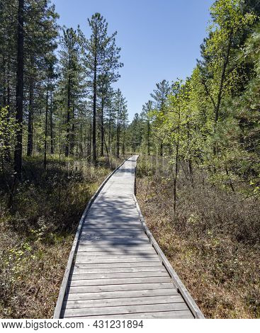 Ecological Trail In The Flat Cedar Forest Of The Baikal Taiga On Sunny Summer Day. The Canvas Of The