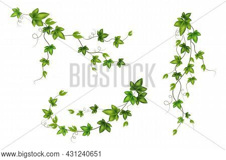 Set Of Geen Vine, Liana Or Ivy Hanging From Above Or Climbing The Wall.